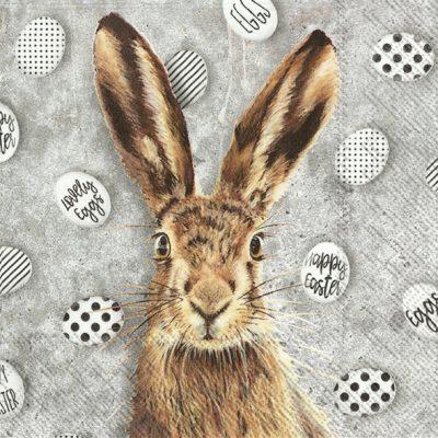 Oh My Rabbit